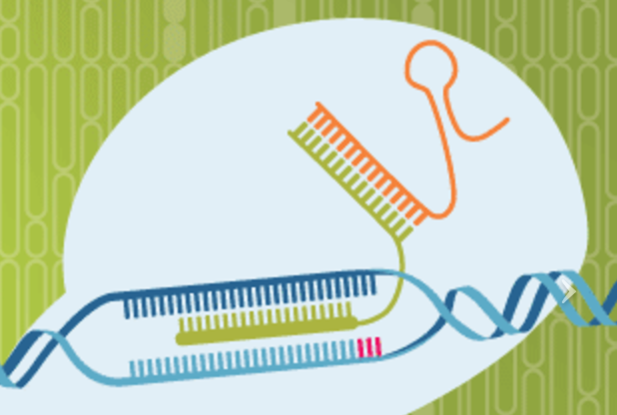 Easy genome editing using Crispr-Cas9 tools from IDT