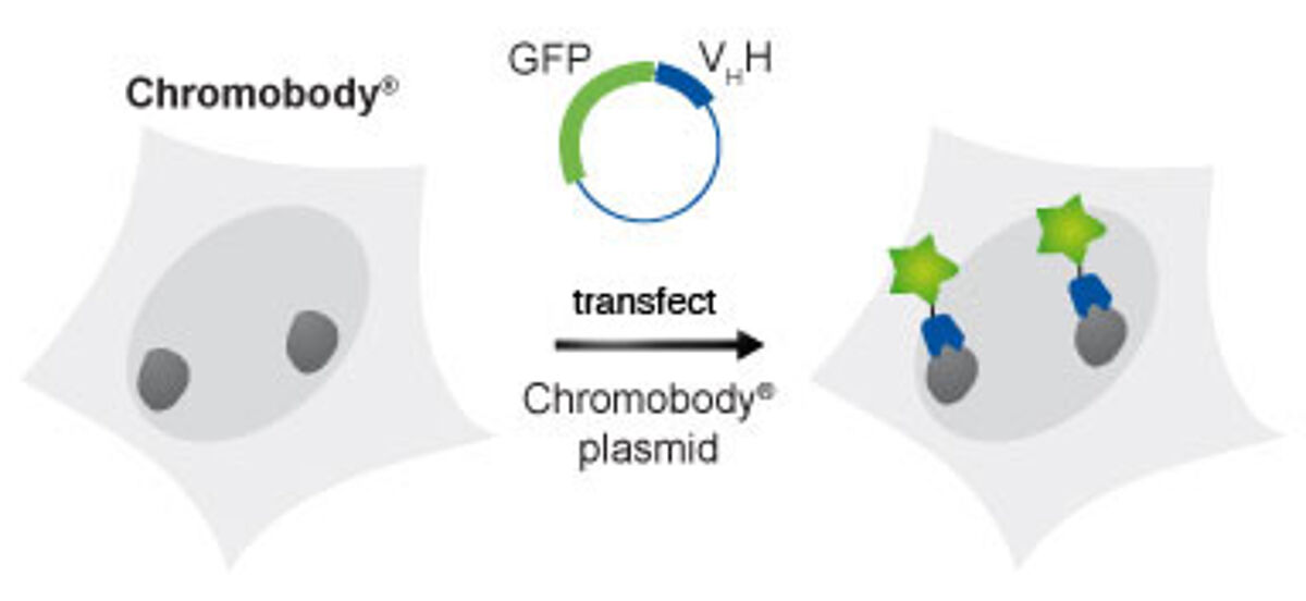 ChromoTek Chromobodies plasmid figure jpg