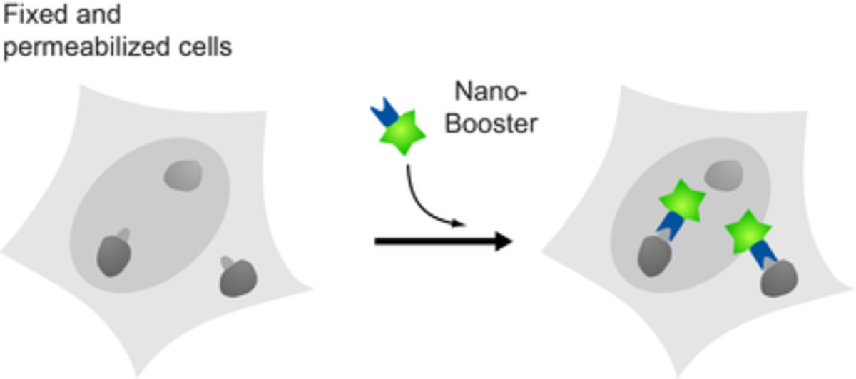 Chromotek Nano-Booster figure png
