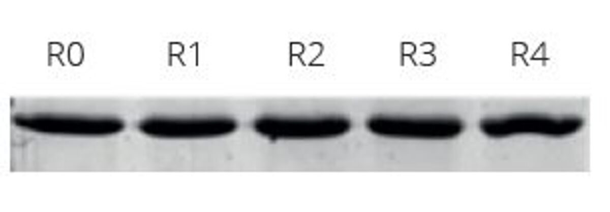 Regenerate ChromoTek's Spot-Cap resing at least 4x