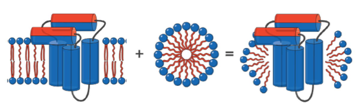 Membrane protein removed from lipid bilayer with detergent image
