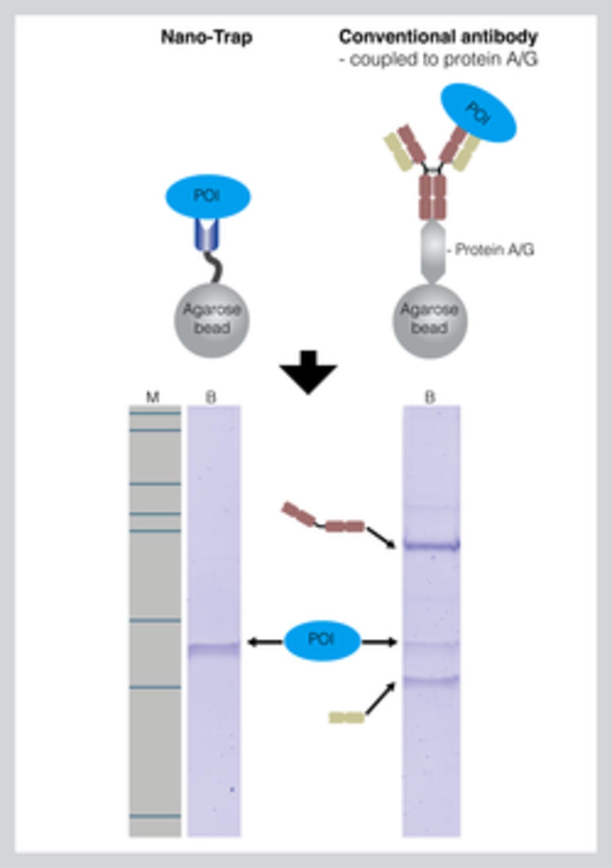 ChromoTek Nano-Traps figure png