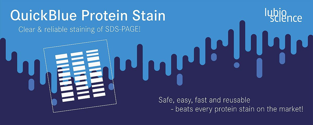 QuickBlue Protein Stain - clear and reliable staining in western blots!