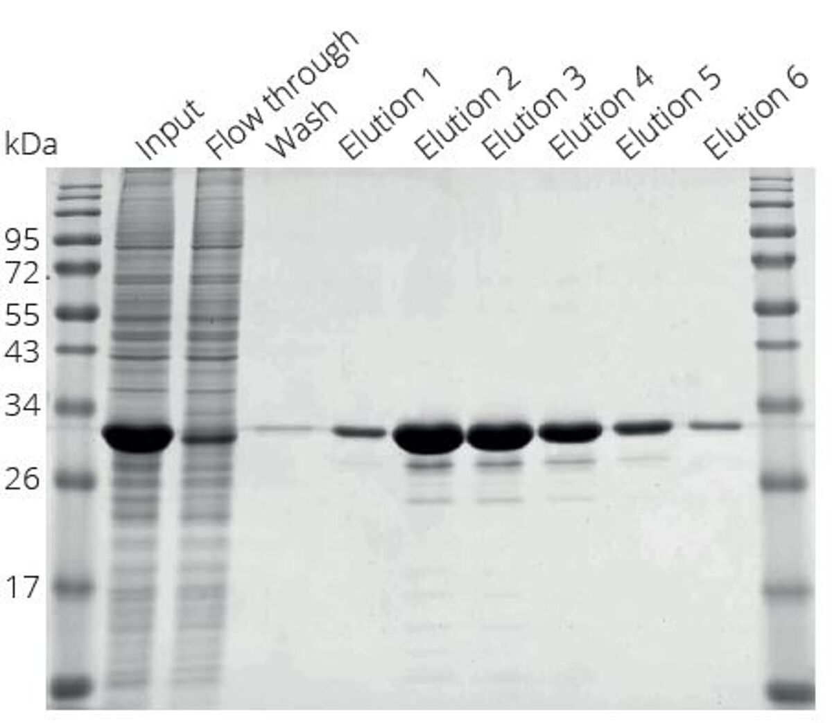 One step purification of Spot-tagged protein