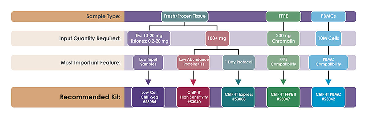 Active Motif ChIP kits for frozen or FFPE tissue