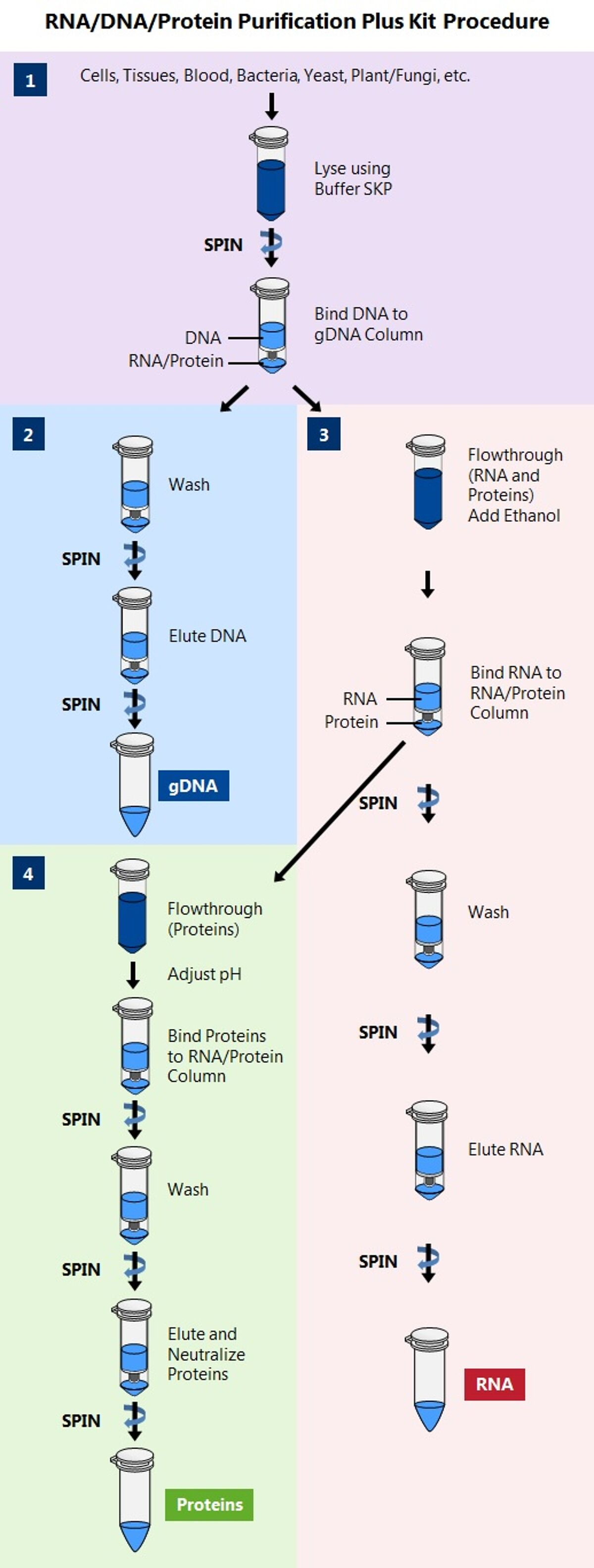 Norgen - sequential isolation of gDNA, RNA and proteins jpg